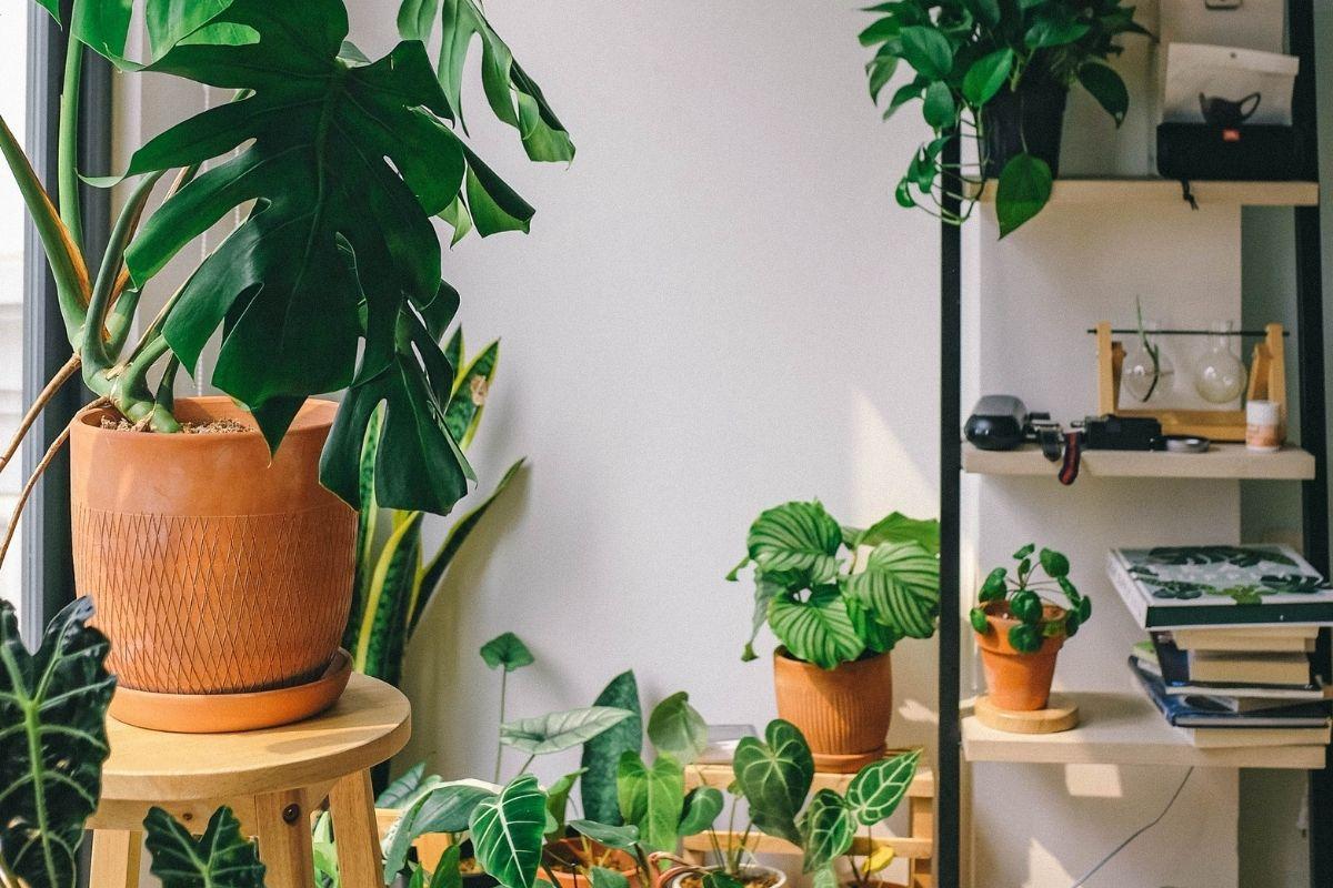 Pot plants inside