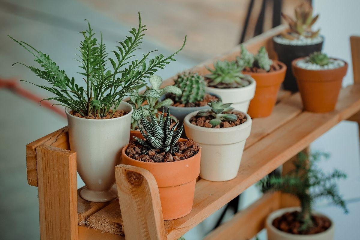 Cactus inside pot plants