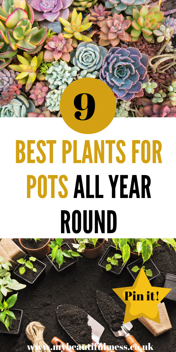 Here are 9 best plants for pots all year round. Most of these flower during the colder months and look great in any sized garden by Laura at My Beautiful Mess #plants #bestplantsforpots #winterflowers