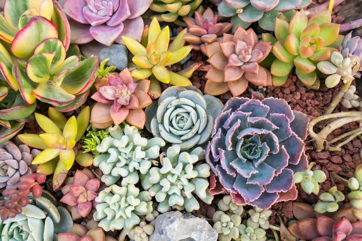 Colourful plants