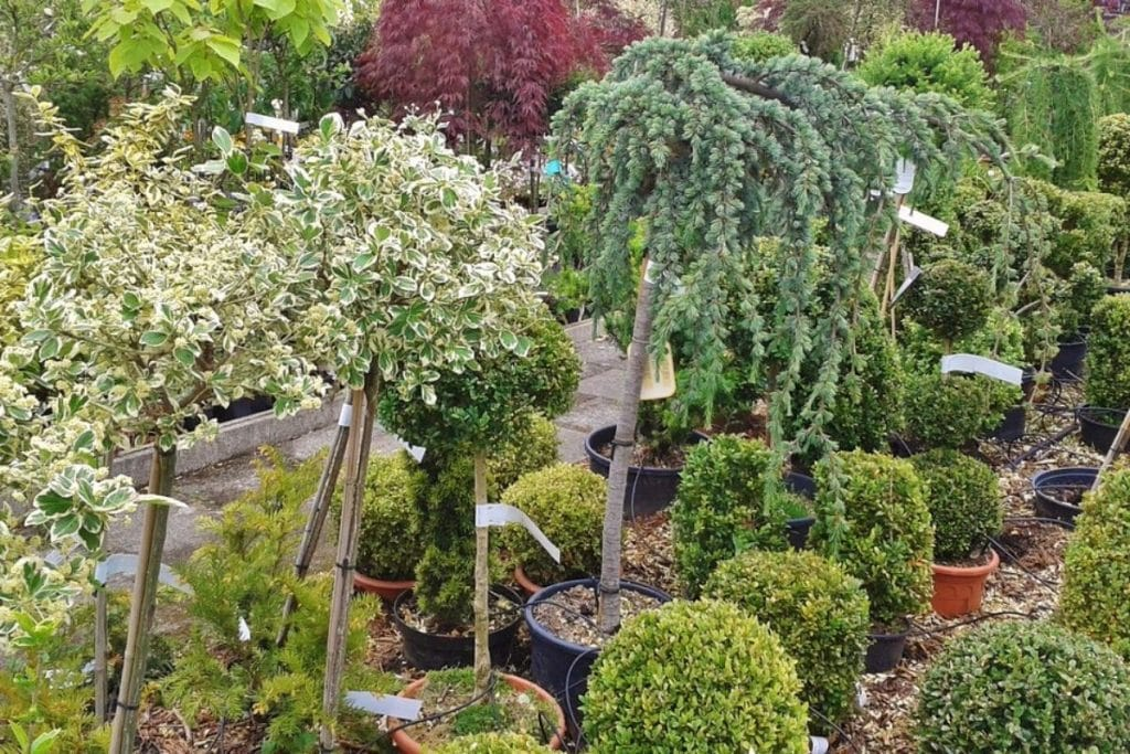 Potted trees and plants