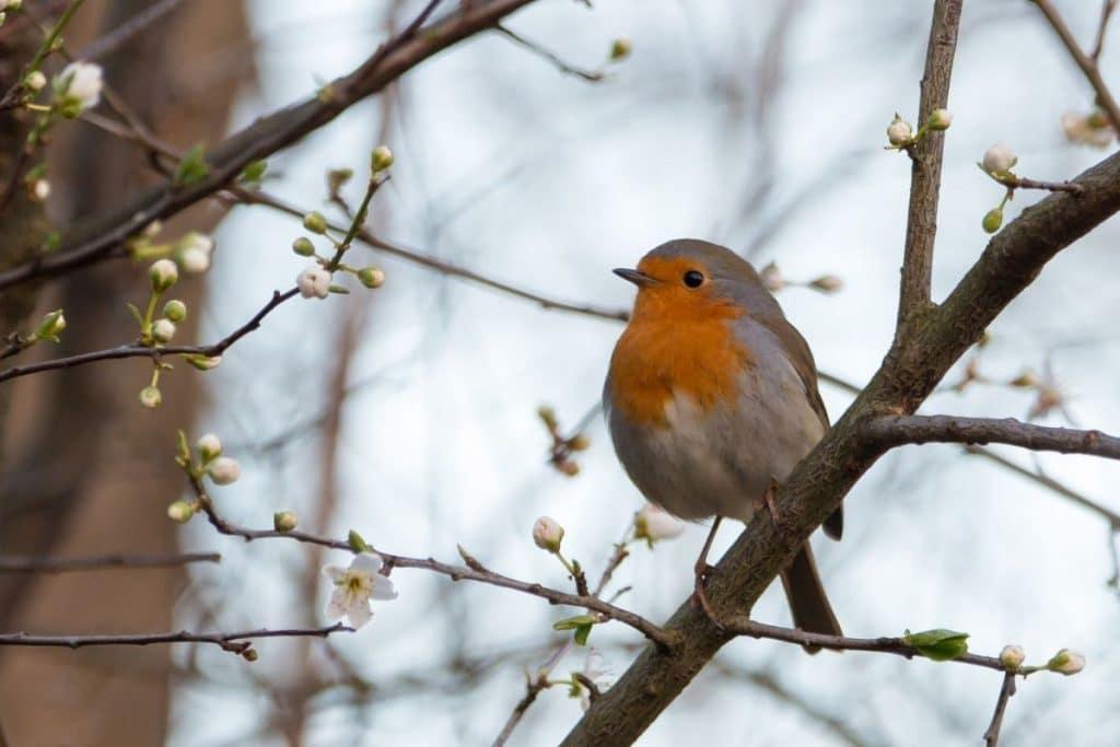Robin sat on a tree branch