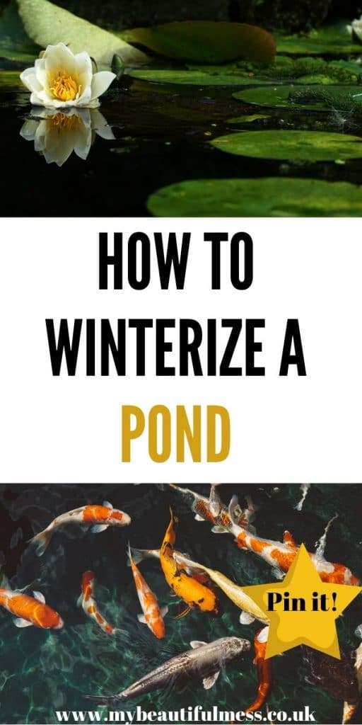 This is how to winterize a pond. Whatever size pond you have, it's important that you look after it in the Winter months ready for Spring by Laura at My Beautiful Mess