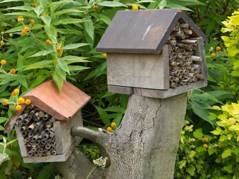 Tress with bee houses in