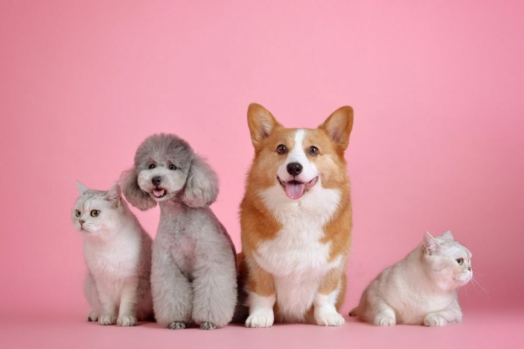 Cats and dogs on a pink background