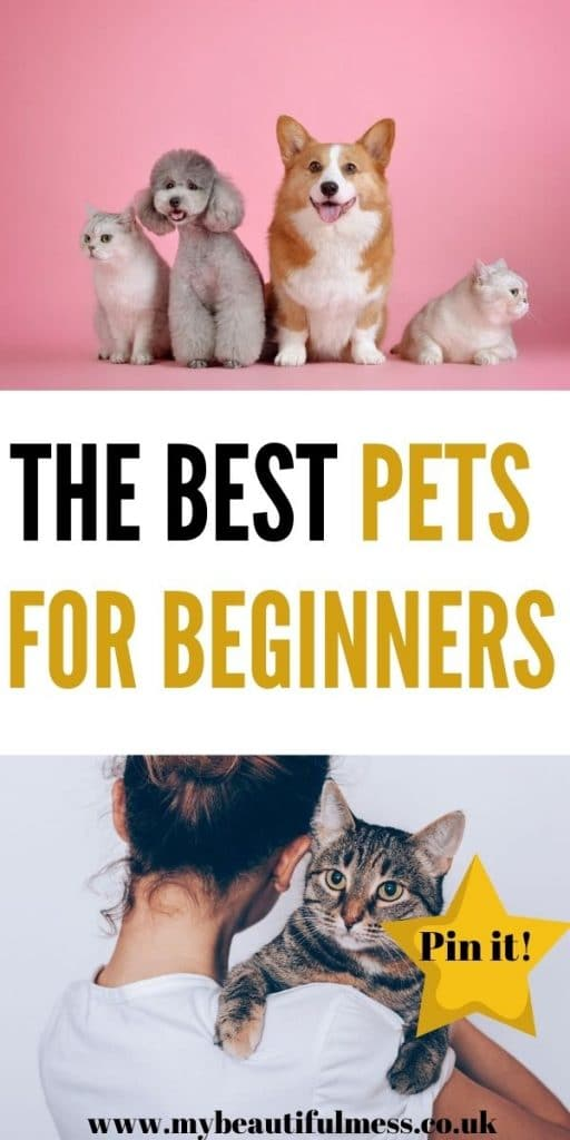Choosing your first pet can be a very big decision to make. Hopefully, this article will make that decision a little bit easier by Laura at My Beautiful Mess