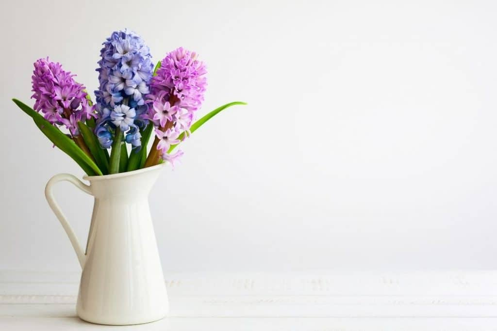 Flowers sat in a white jug