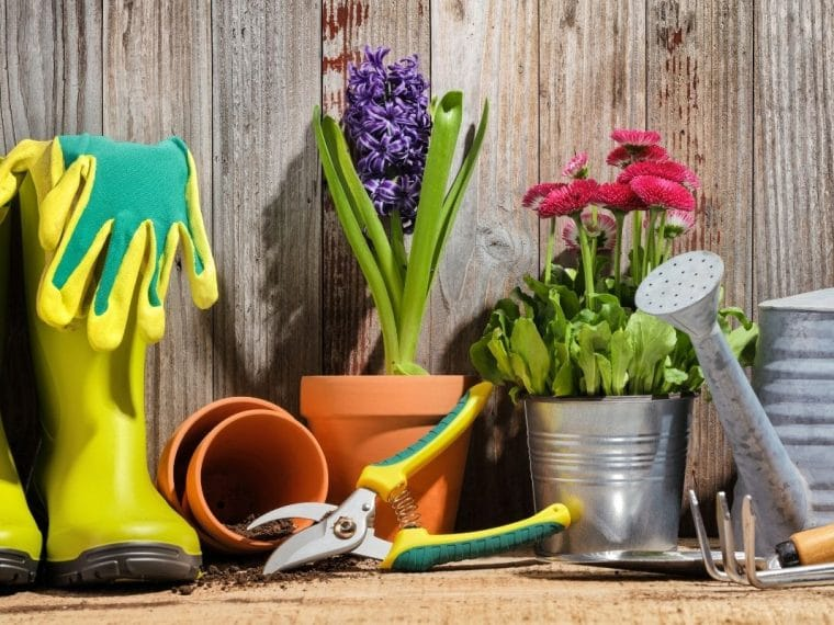 Garden boots, flowers and cutters