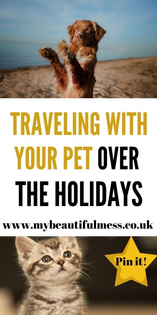 Traveling with your pet can seem stressful but we've got some top tips here to help the process go easily on both of you by Laura at My Beautiful Mess
